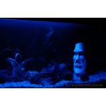 Mondlichter für Aquarien