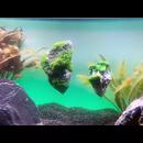 Schwimmender fliegender Stein - Aquarium Dekoration Floating Rock Größe 2.