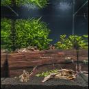 Zeolith Pulver - Der Wasseraufbereiter für kristallklares Wasser im Aquarium oder Gartenteich 1000g