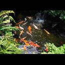 Zeolith Pulver - Der Wasseraufbereiter für kristallklares Wasser im Aquarium oder Gartenteich 100g