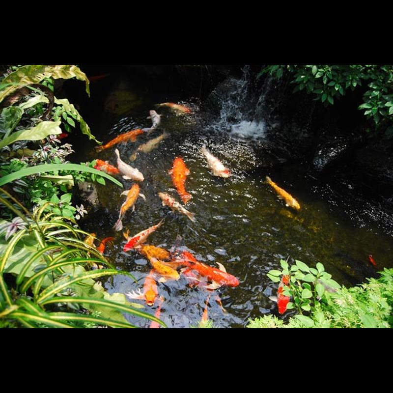 Gerstenstroh pellets gegen algen im aquarium 6 90 for Aquarium im teich