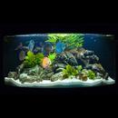 Zeolith Pulver - Der Wasseraufbereiter für kristallklares Wasser im Aquarium oder Gartenteich 500g