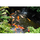 Gerstenstroh Pellets gegen Algen im Aquarium oder Teich 600g